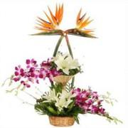 online flowers delivery in Allahabad