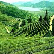 Gangtok - Lachen - Lachung - Gangtok - Pelling - Darjeeling Tour P