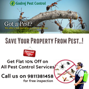 Avail Flat 10% off on all Pest Control Services in Noida,  Delhi NCR