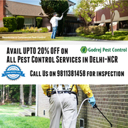 Get UPTO 20% OFF on all Pest Control Services in Delhi/NCR-9811381458