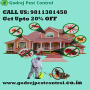 Get Upton 20% OFF Best Pest Control in Delhi/ NCR | Termite Treatment