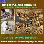 Get Up To 20% Discount Outstanding Termite Treatment Gurgaon