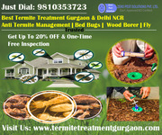 Zero Pest Solutions is Largest Provider in Termite Treatment Gurgaon