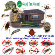 Excellent Service Renders Pest Control Noida | Get Up To 20% OFF