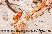 Affordable Termite Control Company in Greater Noida